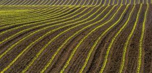 L'agriculture biologique résiste mieux que l'agriculture industrielle