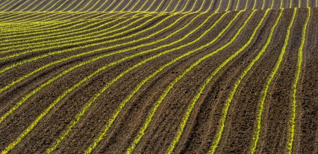 Read more about the article L'agriculture biologique résiste mieux que l'agriculture industrielle