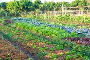 Très bonne nouvelle pour tout les agriculteurs qui veulent convertir leur productions. La subvention à la certification voit effectivement le jour.