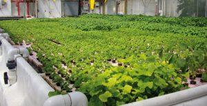 Production biologique: la filière en cours de structuration