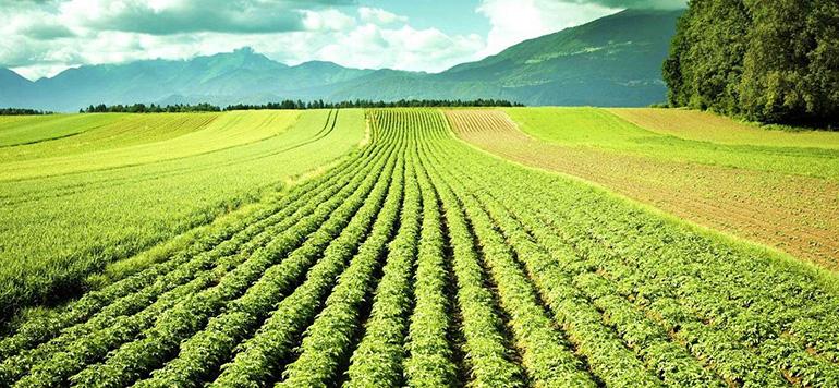 Des subventions pour la certification des produits bio