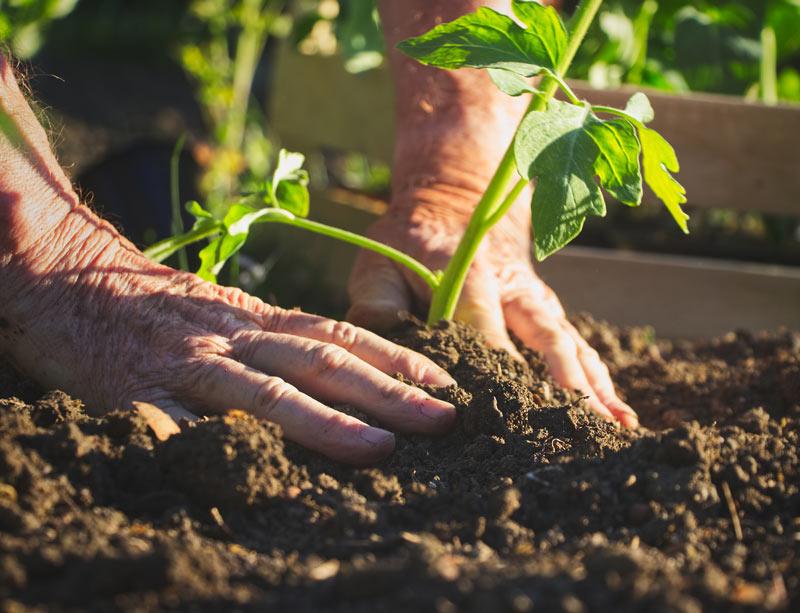 Nouveau décret gouvernemental sur la subvention des certifications des produits agricoles biologiques