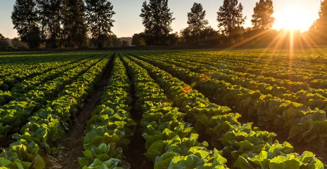 La filière de production biologique au Maroc est en cours de restructuration